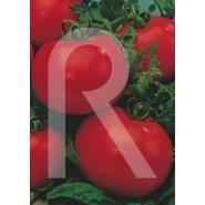 Semillas de Tomate Ace 55 VF