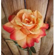 Rosa latex